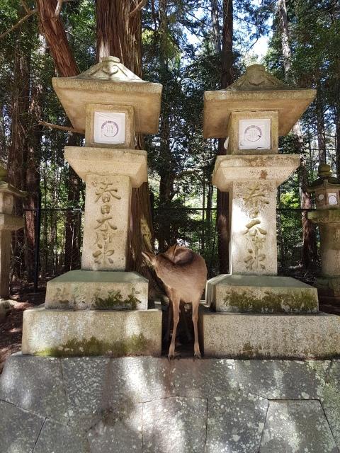 Japonija_Nara_Titulinis