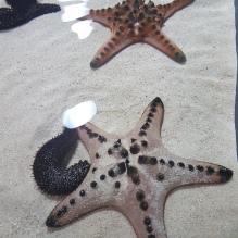 Japonija_Okinava salynas_Churaumi akvariumas